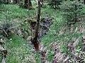Naturpark Arnsberger Wald fd (10).jpg