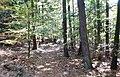 Naturpark und Biosphärenreservat Pfälzerwald - panoramio (11).jpg