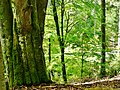 Naturschutzgebiet Hesel-, Brand- und Kohlmisse - panoramio (3).jpg