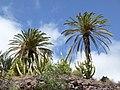 Oasis Park botanical garden - Fuerteventura - 04.jpg