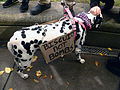 Occupy Portland, biscuits not bombs.jpg