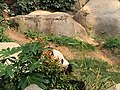 Ocean Park Giant Panda.jpg