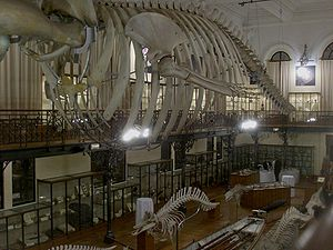 Oceanographic Museum - A view of the interior of the museum.