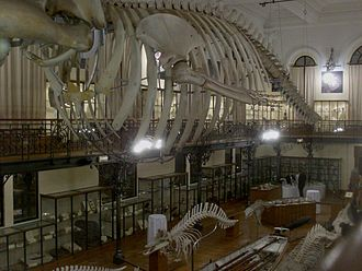 Oceanographic Museum of Monaco - A view of the interior of the museum.