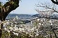 Okocho Yahata, Nankoku, Kochi Prefecture 783-0044, Japan - panoramio (6).jpg