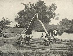 развития сельскохозяйственных кооперации в индии