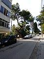 Old tree in Durrës.jpg