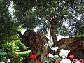 Olive Tree Singapore.jpg
