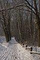 Opaleń, Kampinos - panoramio.jpg