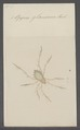 Oppia - Print - Iconographia Zoologica - Special Collections University of Amsterdam - UBAINV0274 072 05 0005.tif