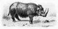 Oregon Rhinoceros.png