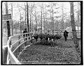 Ostrich farm, Hot Springs, Ark. LCCN2016808461.jpg