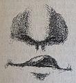 Ottův slovník naučný - obrázek č. 3153.jpg