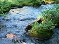 Outflow stream of Round River Marsh, near Dewey Lake. (fdb9b64a2b614620a2f3842aee384378).JPG