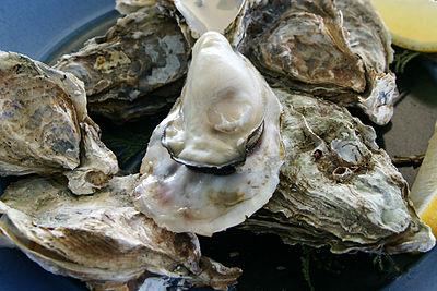 400px oyster ushimado03s