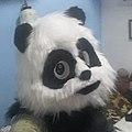 PIng panda profile.jpg