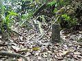 Pahang-Selangor Border Stone.jpg