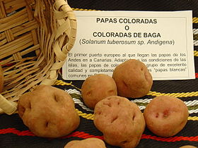 Papas coloradas.jpg