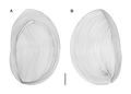 Parasite180015-fig4 Sicuophora multigranularis (Armophorea, Clevelandellida).png