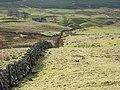 Pastures above Cringate - geograph.org.uk - 343814.jpg