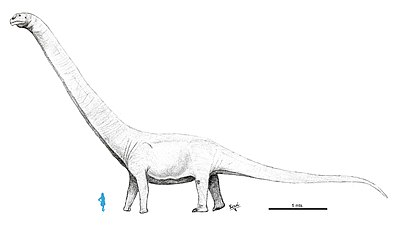 Patagotitan mayorum.jpg