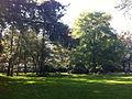 Pelouse-jardin-du-Luxembourg(Paris).jpg