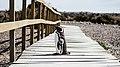 Península Valdés penguin (Unsplash).jpg