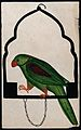 Pet parrot on a perch. Watercolour drawing. Wellcome V0045177.jpg