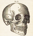 Physiology for Young People - 1884 - The skull 1.png
