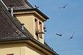 Pigeons Saarlouis Hbf.jpg