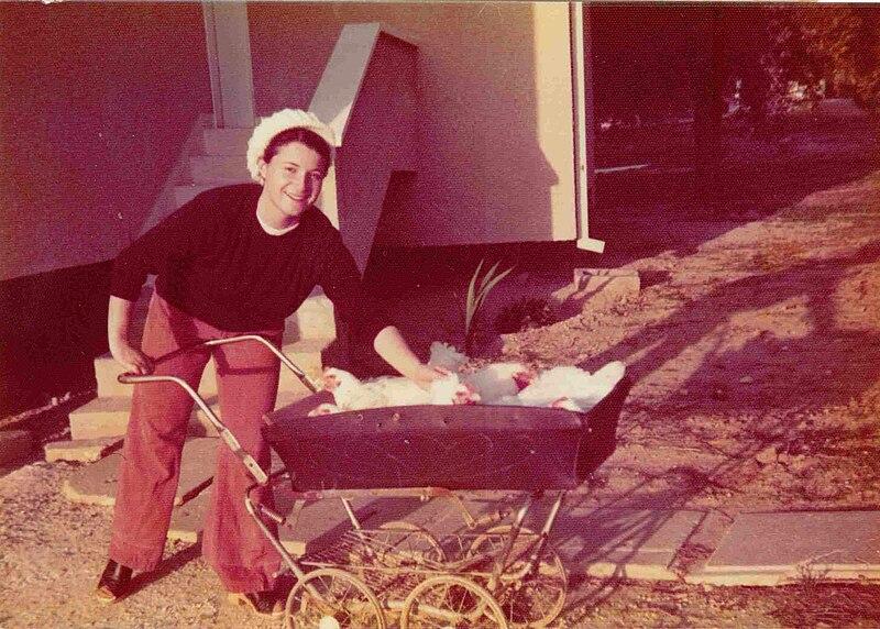 הכנות לשבת – הובלת תרנגולות לשחיטה