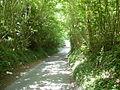 Pilgrim's Way, en route for Boxley - geograph.org.uk - 870655.jpg
