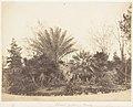 Pincian Garden, Rome MET DP143539.jpg