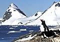 Pingüinos, Cuverville 4.jpg