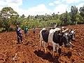Planting season of Soth Baringo.jpg