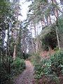Policy woodlands, Kinloch Hourn - geograph.org.uk - 652810.jpg