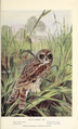 Portraits and Habits of Our Birds-1 0085.png