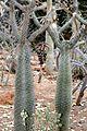 Pretoria Botanical Gardens-023.jpg