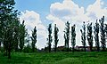 Prikubanskiy okrug, Krasnodar, Krasnodarskiy kray, Russia - panoramio (13).jpg