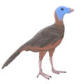 Protarchaeopteryx-reconstruction.png