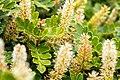 Pseudoparamo vegetation Vegetación de pseudoparamo (22458888428).jpg