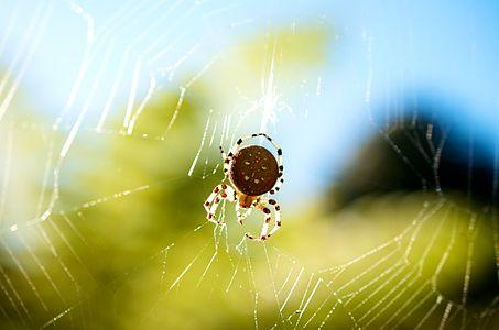 Pumpkin Spider seen during autumn in San Francisco