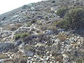 Qrendi, Malta - panoramio (156).jpg