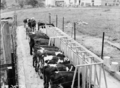 Queensland State Archives 1734 Cattle drinking troughs Veresdale February 1955.png
