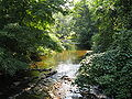 Quiet Brook in Summer in Connecticut.jpg