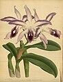 R. Warner & B.S. Williams - The Orchid Album - volume 06 - plate 285 (1887).jpg