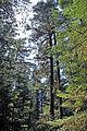 Rainforest Trail, Pacific Rim National Park2.jpg