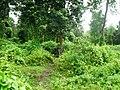 Rajiv Gandhi Tiger Reserve, Nagarhole - panoramio (6).jpg