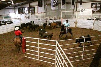 Ranch sorting - Riders move cattle one at a time from one pen to the other.