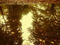 Reflection of trees in a puddle.jpg